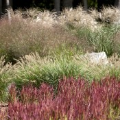 Egremont – mixed ornamental grass bed