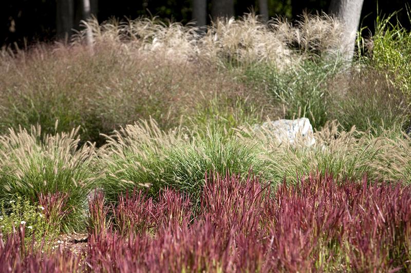 Landscape design okerstrom lang landscape architects for Ornamental grass bed
