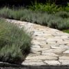 Egremont – Curving South Bay Quartzite entry walk lined w Lavender