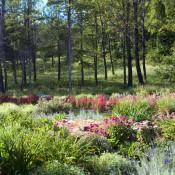 Egremont woodland edge texture pano