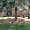 Nina's garden during 3